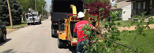 st louis tree removal